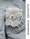 Stock photo cute gray funny kitten sleep in gray cloth 436143715