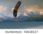Bald Eagle Over Homer Alaska...