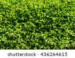 Excellent Green Leaf Vegetatio...