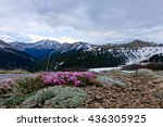 Small photo of Delicate Pink Flowers of Alpine Clover and Snow Capped Mountains. High alpine tundra at Independence Pass near Aspen, Colorado, USA.