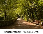 tree lined avenue in holland... | Shutterstock . vector #436311295