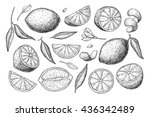 vector hand drawn lemon set.... | Shutterstock .eps vector #436342489