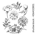 a set of sketches blooming... | Shutterstock .eps vector #436432801