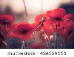 many red poppy flowers at... | Shutterstock . vector #436529551