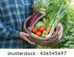 men's hands holding basket with ... | Shutterstock . vector #436545697