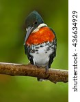 Small photo of Beautiful bird. Amazon Kingfisher, Chloroceryle amazona, portrait of green and orange nice bird, CanoNegro, Costa Rica. Kingfisher from tropic forest. Portrait of beautiful bird from Peru Amazon.