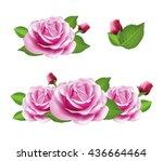 rose flower isolated on white... | Shutterstock .eps vector #436664464