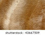 golden fur background | Shutterstock . vector #43667509