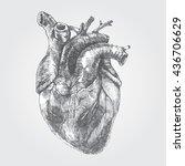 vintage hand drawn human heart  ... | Shutterstock .eps vector #436706629