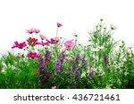 fresh flowers and green grass... | Shutterstock . vector #436721461