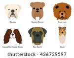 set of different breeds of dogs ... | Shutterstock .eps vector #436729597