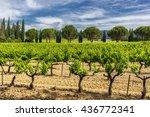 vinyard in the luberon provence   Shutterstock . vector #436772341
