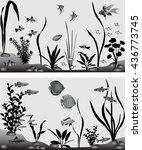 different species of freshwater ...   Shutterstock .eps vector #436773745