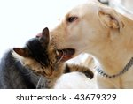 beautiful striped cat and dog... | Shutterstock . vector #43679329