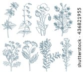 herbs wild flowers botanical... | Shutterstock .eps vector #436821955