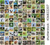 Collage 100 Photos Wildlife Animals - Fine Art prints