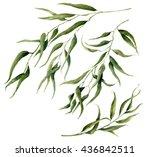 watercolor eucalyptus leaves... | Shutterstock . vector #436842511