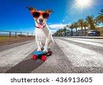 jack russell terrier dog ... | Shutterstock . vector #436913605