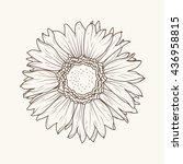 isolated sunflower aster daisy...   Shutterstock .eps vector #436958815