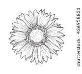 sunflower aster daisy isolated... | Shutterstock .eps vector #436958821