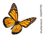monarch butterfly isolated on... | Shutterstock . vector #43699795