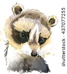 Cute Raccoon. Raccoon....