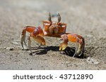 Ghost Crab At His Hole