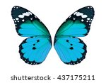 beautiful blue monarch... | Shutterstock . vector #437175211