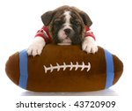 Stock photo english bulldog puppy wearing red jersey laying on stuffed football 43720909