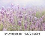 Violet Lavender Field In Retro...