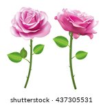Stock vector pink rose flower isolated on white background vector roses realistic flowers 437305531