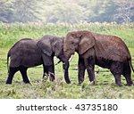 Two Elephants Hugging