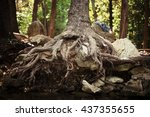 Exposed Roots   A Photograph O...