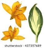 Pressed Orange Lilly Flowers ...