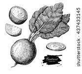 beetroot hand drawn vector set. ... | Shutterstock .eps vector #437433145