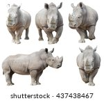 White rhinoceros  square lipped ...