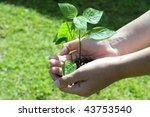 hands holding a small seedling ready to be planted - stock photo