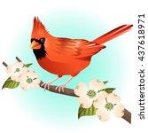red cardinal bird and dogwood...   Shutterstock .eps vector #437618971