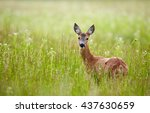 Portrait Of A Beautiful Doe In...