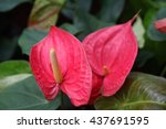 Spadix Flower