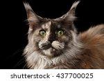 close up portrait of brown... | Shutterstock . vector #437700025