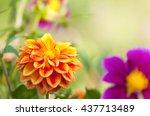 Orange Yellow Dahlia Blossom...
