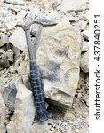 Small photo of fossilized ammonite in rock with hammer tool.
