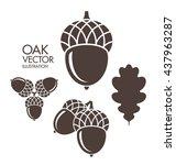 Oak. Acorn. Leaf. Vector...