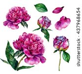 watercolor peonies and leaves....   Shutterstock . vector #437968654