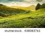 Sunrise Of Tea Plantation In...