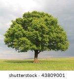 Oak Tree With New Leaf Growth...