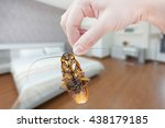 woman's hand holding cockroach... | Shutterstock . vector #438179185