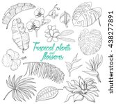 set of isolated tropical plants ... | Shutterstock .eps vector #438277891