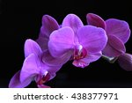 Purple orchid group open at...
